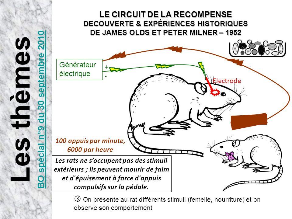 Electrode +-+- On présente au rat différents stimuli (femelle, nourriture) et on observe son comportement 100 appuis par minute, 6000 par heure Les ra