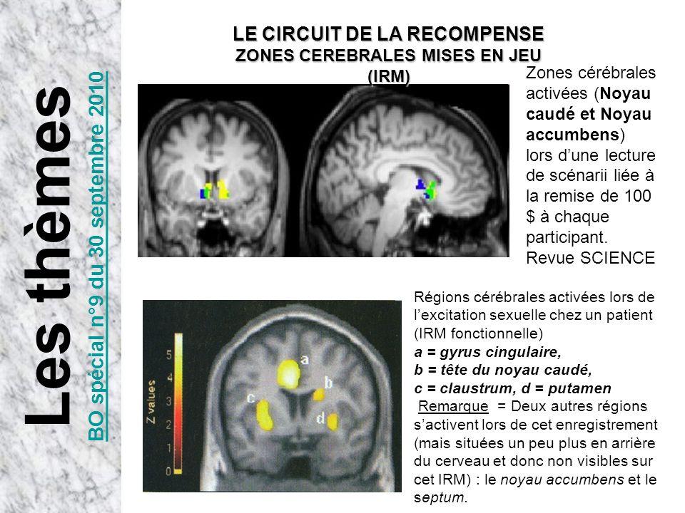Régions cérébrales activées lors de lexcitation sexuelle chez un patient (IRM fonctionnelle) a = gyrus cingulaire, b = tête du noyau caudé, c = claust
