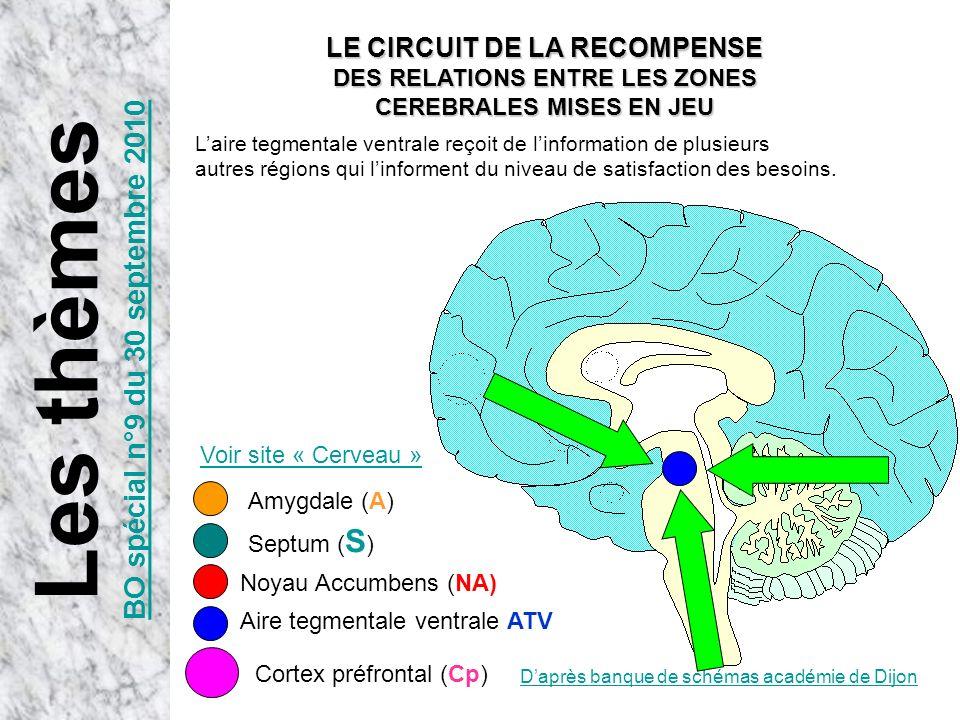 Daprès banque de schémas académie de Dijon Aire tegmentale ventrale ATV Noyau Accumbens (NA) Laire tegmentale ventrale reçoit de linformation de plusi