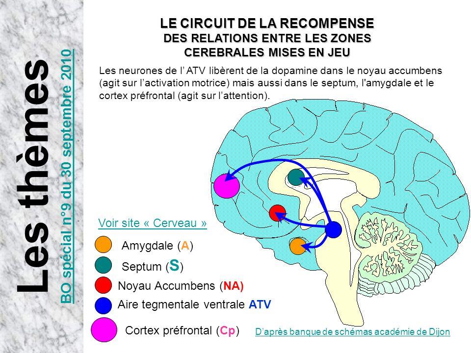 Daprès banque de schémas académie de Dijon Aire tegmentale ventrale ATV Noyau Accumbens (NA) Les neurones de l ATV libèrent de la dopamine dans le noy