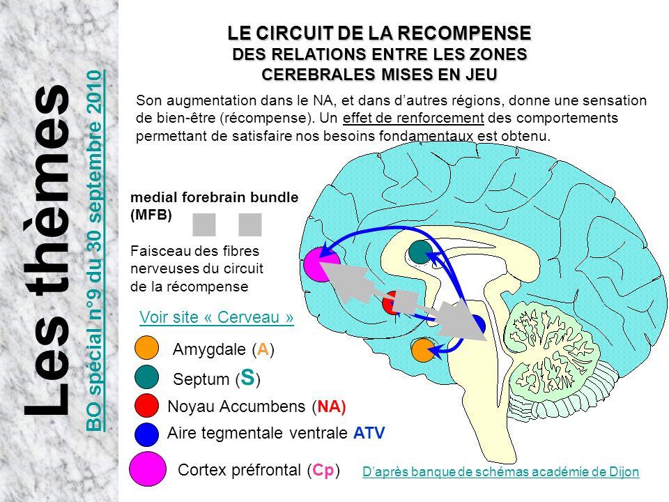 Daprès banque de schémas académie de Dijon Aire tegmentale ventrale ATV Noyau Accumbens (NA) Septum ( S ) Amygdale (A) Cortex préfrontal (Cp) medial f
