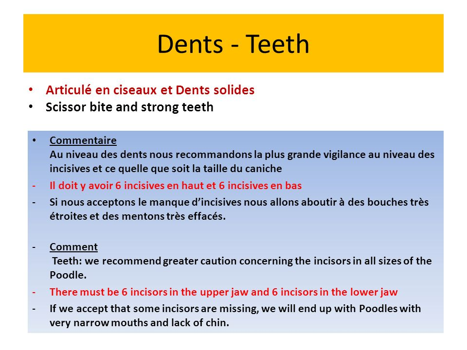 Dents - Teeth Articulé en ciseaux et Dents solides Scissor bite and strong teeth Commentaire Au niveau des dents nous recommandons la plus grande vigi