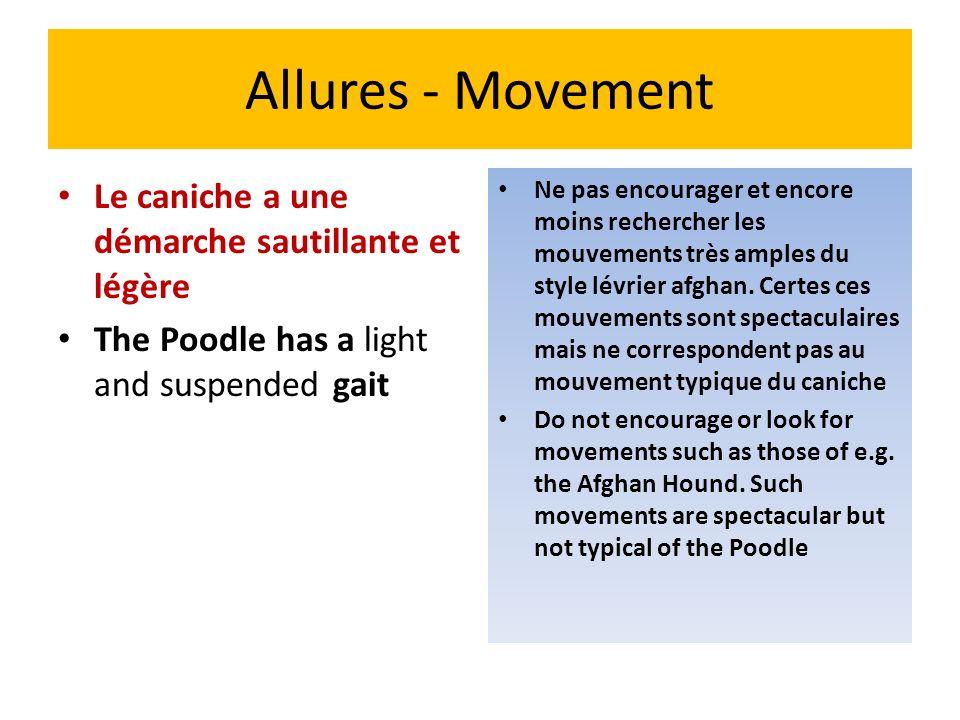 Allures - Movement Le caniche a une démarche sautillante et légère The Poodle has a light and suspended gait Ne pas encourager et encore moins recherc