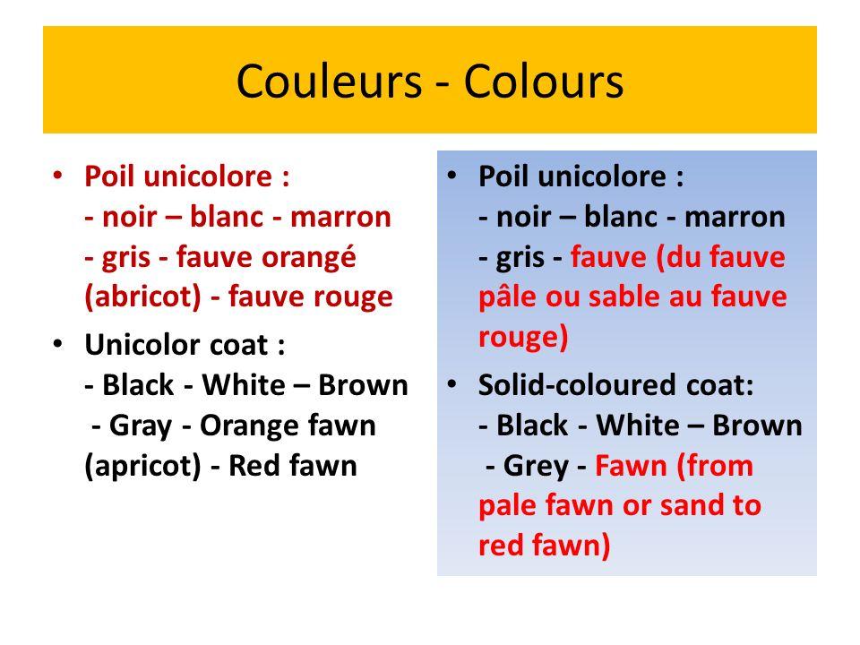 Couleurs - Colours Poil unicolore : - noir – blanc - marron - gris - fauve orangé (abricot) - fauve rouge Unicolor coat : - Black - White – Brown - Gr