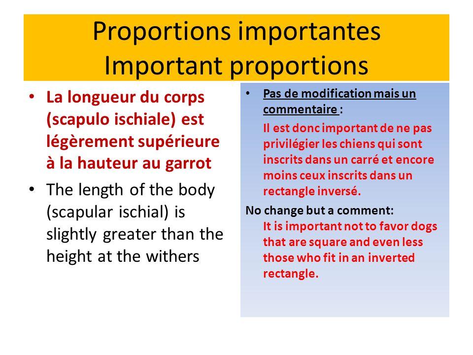 Proportions importantes Important proportions La longueur du corps (scapulo ischiale) est légèrement supérieure à la hauteur au garrot The length of t