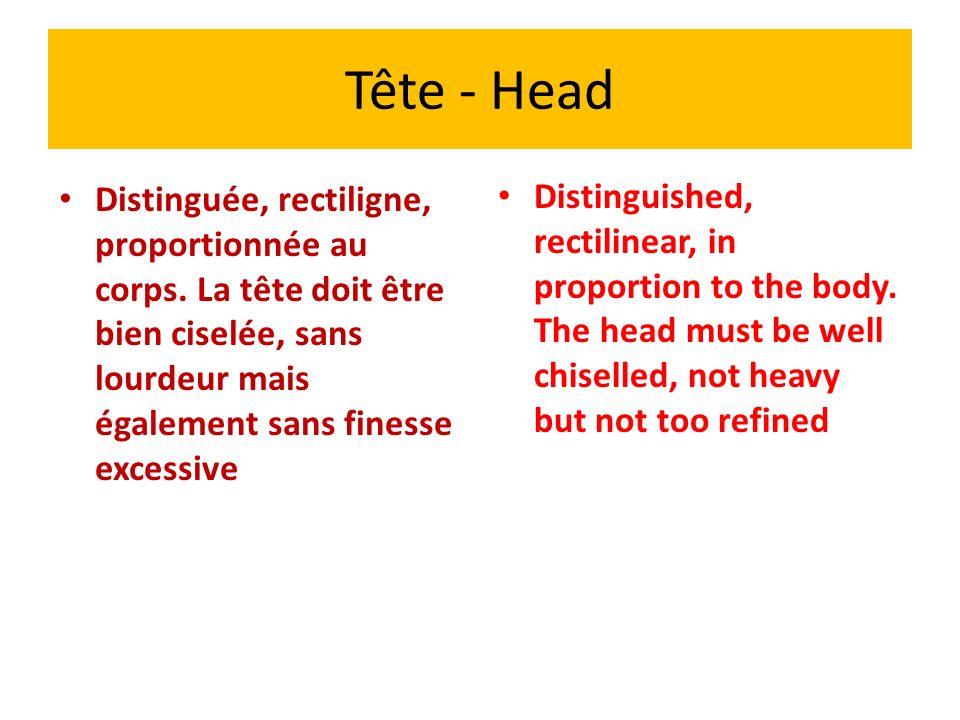 Tête - Head Commentaires - Il faut pénaliser les hyper types qui donnent souvent des têtes extrêmes, trop fines, avec des crânes étroits et des mandibules inférieurs très étroits et un menton très effacé.