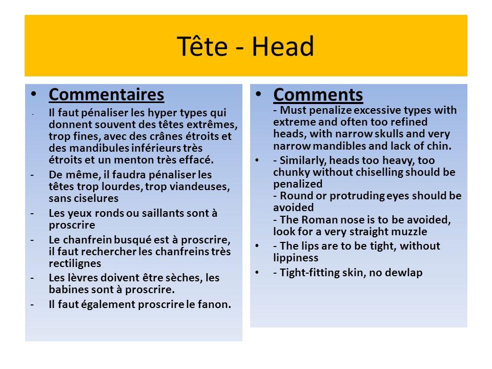 Tête - Head Commentaires - Il faut pénaliser les hyper types qui donnent souvent des têtes extrêmes, trop fines, avec des crânes étroits et des mandib