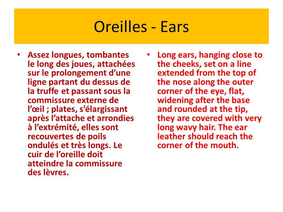 Oreilles - Ears Assez longues, tombantes le long des joues, attachées sur le prolongement dune ligne partant du dessus de la truffe et passant sous la