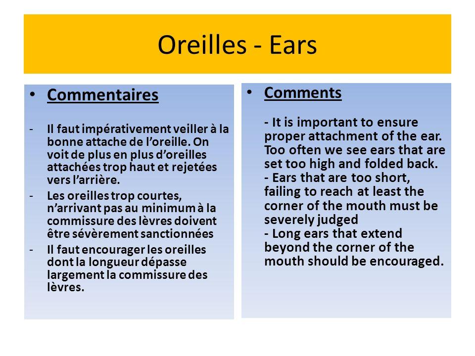 Oreilles - Ears Commentaires -Il faut impérativement veiller à la bonne attache de loreille. On voit de plus en plus doreilles attachées trop haut et