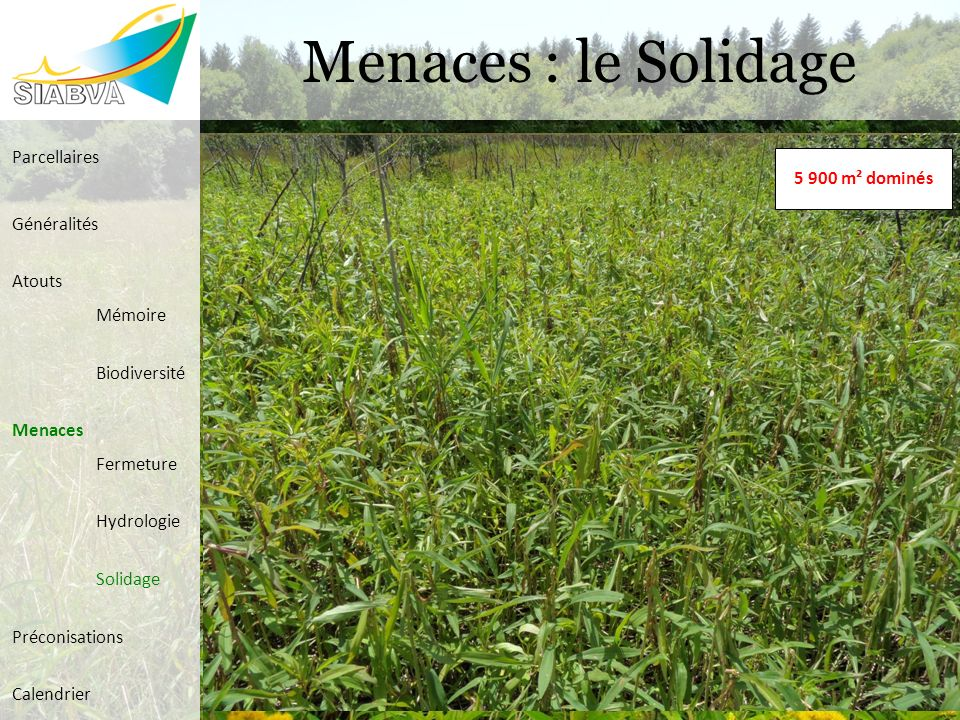 Menaces : le Solidage 2 100 m² colonisés5 900 m² dominés Parcellaires Généralités Atouts Mémoire Biodiversité Menaces Fermeture Hydrologie Solidage Pr