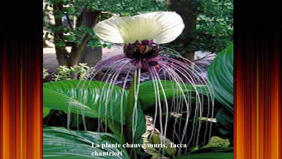 Une fleur unique au monde ! Fleur Oiseau, une espèce protégée et il est interdit de l'exporter. C'est la seule façon pour vous de voir cette fleur. UN