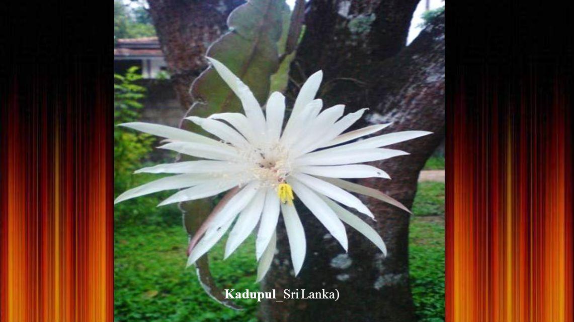 Orchidée epihyte