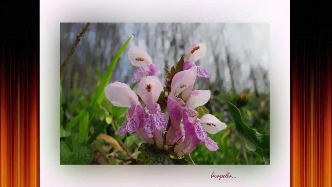 Fleur marionette
