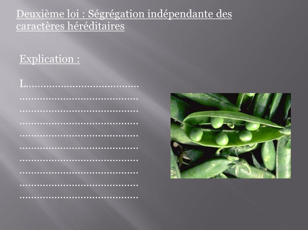 Deuxième loi : Ségrégation indépendante des caractères héréditaires Explication : L...................................................................