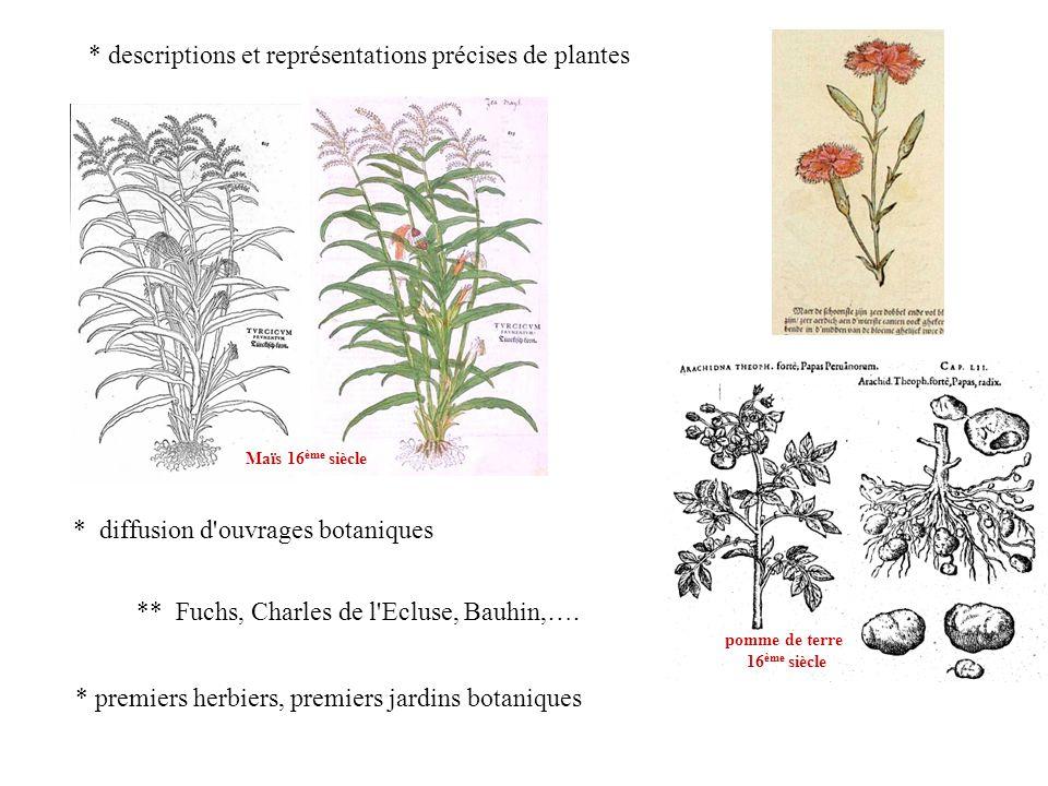* diffusion d'ouvrages botaniques Maïs 16 ème siècle ** Fuchs, Charles de l'Ecluse, Bauhin,…. * premiers herbiers, premiers jardins botaniques pomme d