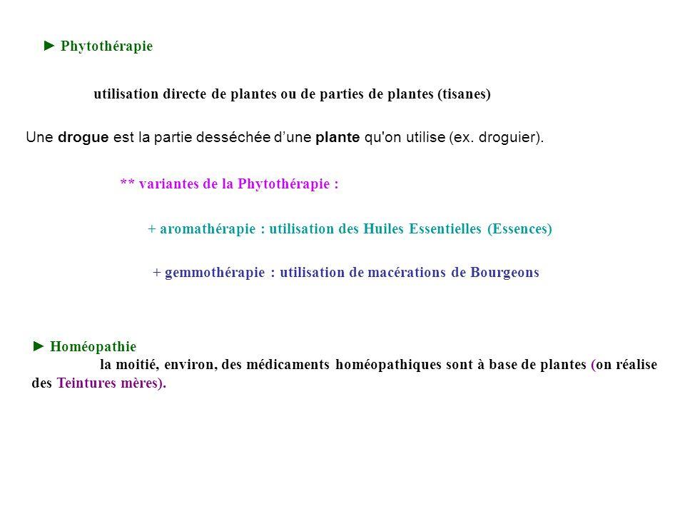 Phytothérapie + aromathérapie : utilisation des Huiles Essentielles (Essences) + gemmothérapie : utilisation de macérations de Bourgeons Homéopathie l