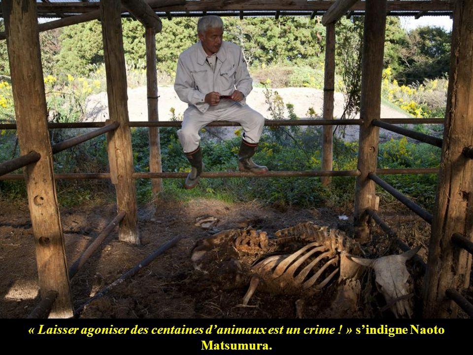 « Laisser agoniser des centaines danimaux est un crime ! » sindigne Naoto Matsumura.