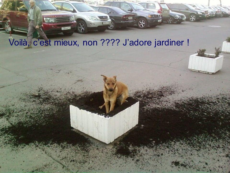 Voilà, cest mieux, non ???? Jadore jardiner !