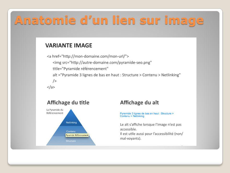 Anatomie dun lien sur image
