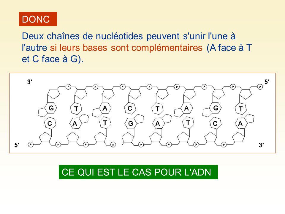 DONC Deux chaînes de nucléotides peuvent s'unir l'une à l'autre si leurs bases sont complémentaires (A face à T et C face à G). CE QUI EST LE CAS POUR