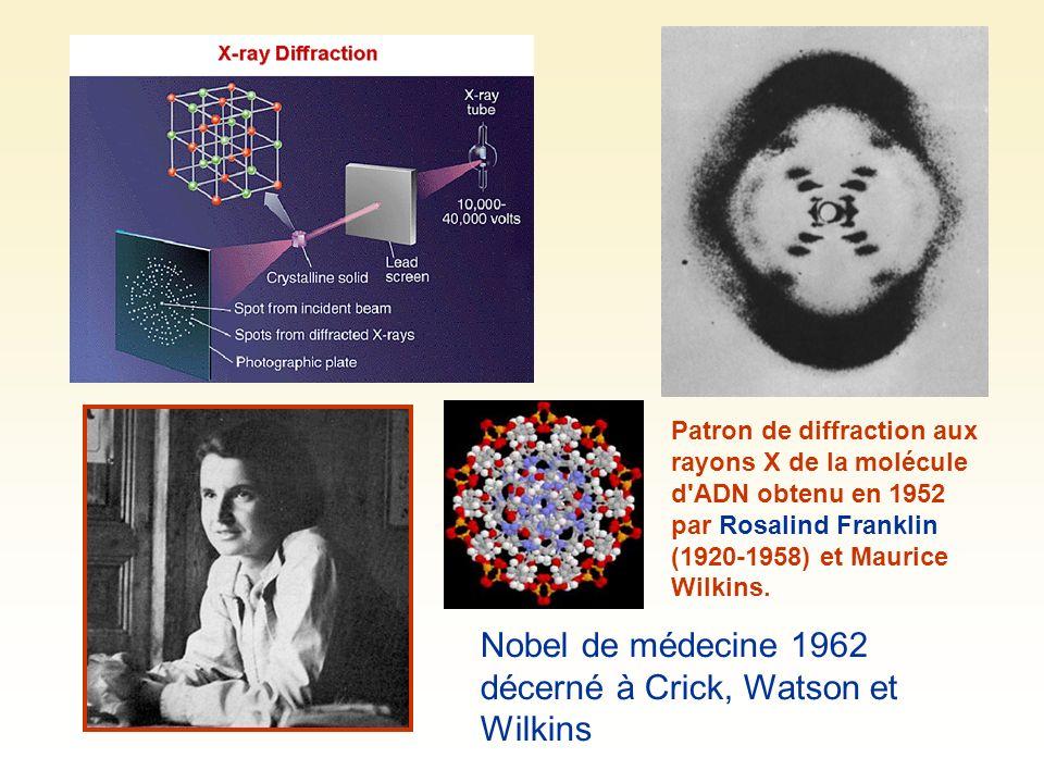 Patron de diffraction aux rayons X de la molécule d'ADN obtenu en 1952 par Rosalind Franklin (1920-1958) et Maurice Wilkins. Nobel de médecine 1962 dé