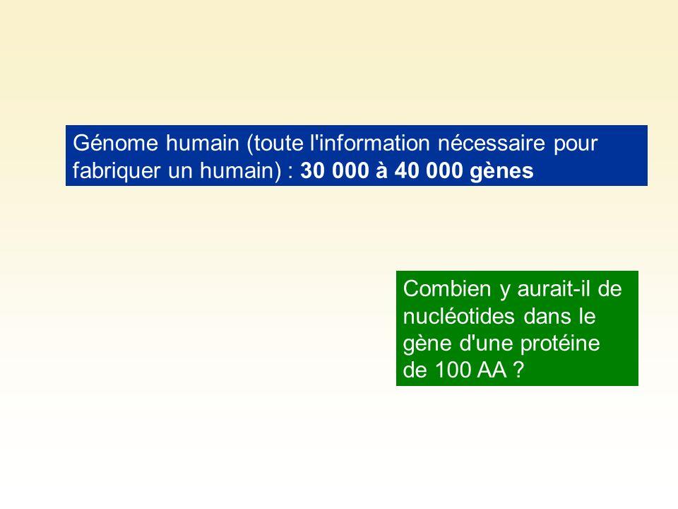 Génome humain (toute l'information nécessaire pour fabriquer un humain) : 30 000 à 40 000 gènes Combien y aurait-il de nucléotides dans le gène d'une
