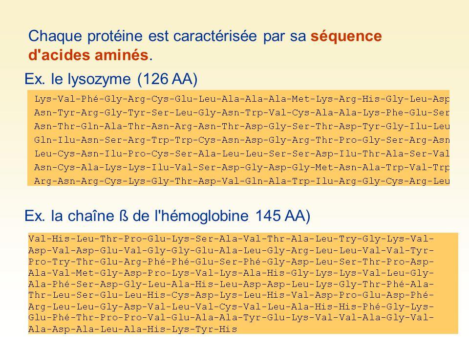 Chaque protéine est caractérisée par sa séquence d'acides aminés. Ex. la chaîne ß de l'hémoglobine 145 AA) Ex. le lysozyme (126 AA)