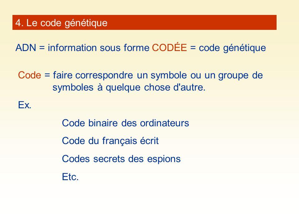 4. Le code génétique ADN = information sous forme CODÉE = code génétique Code = faire correspondre un symbole ou un groupe de symboles à quelque chose