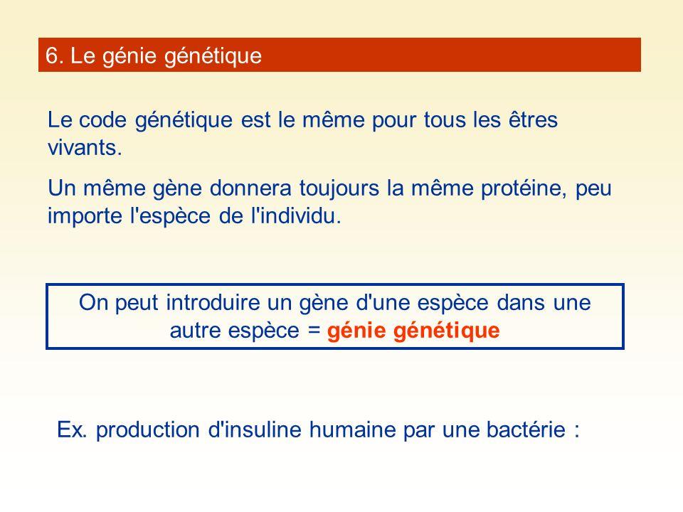 6. Le génie génétique Le code génétique est le même pour tous les êtres vivants. Un même gène donnera toujours la même protéine, peu importe l'espèce