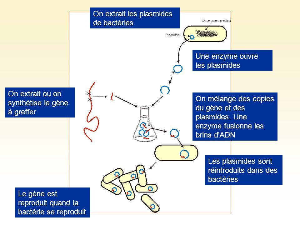 On extrait les plasmides de bactéries Une enzyme ouvre les plasmides On extrait ou on synthétise le gène à greffer On mélange des copies du gène et de