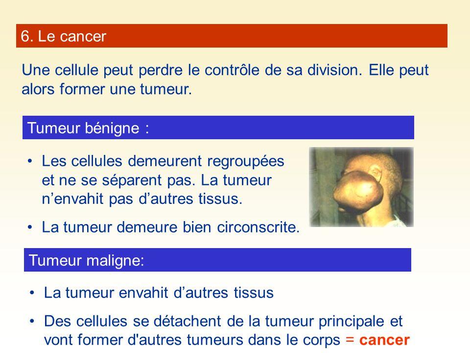 6. Le cancer Une cellule peut perdre le contrôle de sa division. Elle peut alors former une tumeur. Tumeur bénigne : Les cellules demeurent regroupées
