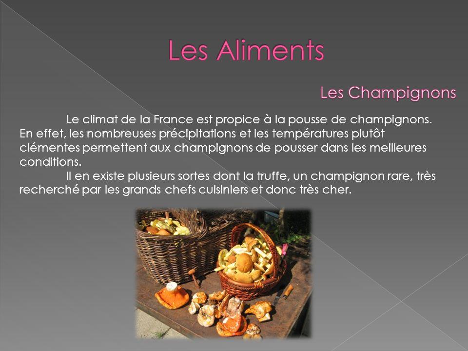 Le climat de la France est propice à la pousse de champignons. En effet, les nombreuses précipitations et les températures plutôt clémentes permettent