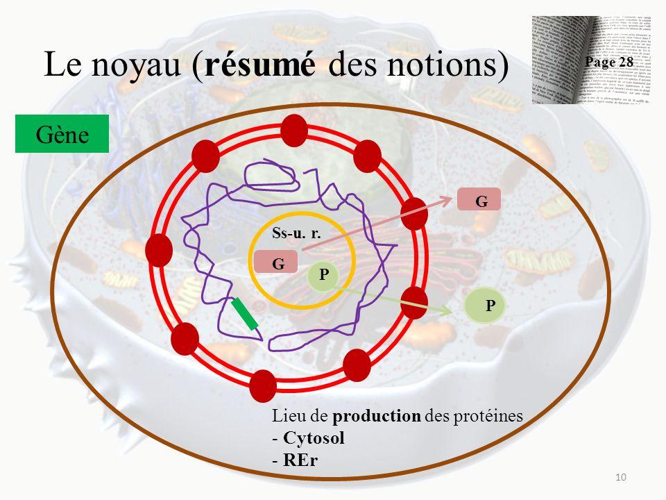 Le noyau (résumé des notions) 10 Ss-u. r. G P G P Gène Lieu de production des protéines - Cytosol - REr Page 28
