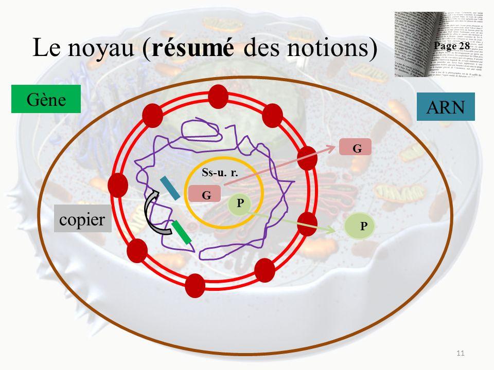 Le noyau (résumé des notions) 11 Ss-u. r. G P G P Gène copier ARN Page 28