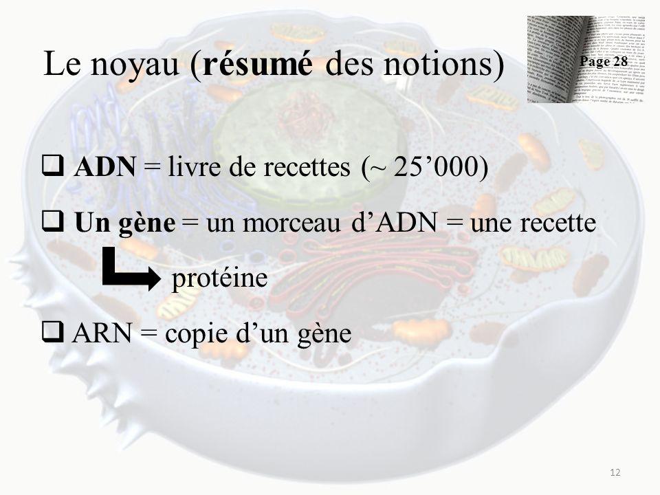 Le noyau (résumé des notions) ADN = livre de recettes (~ 25000) Un gène = un morceau dADN = une recette protéine ARN = copie dun gène 12 Page 28