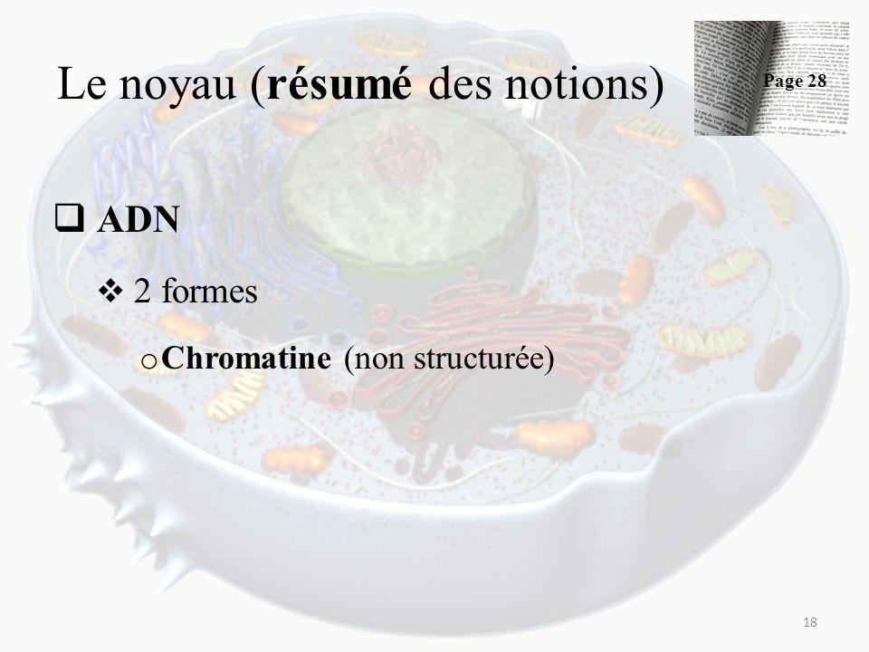 Le noyau (résumé des notions) ADN 2 formes o Chromatine (non structurée) 18 Page 28