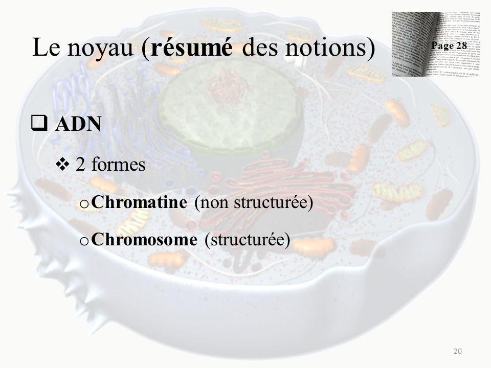Le noyau (résumé des notions) ADN 2 formes o Chromatine (non structurée) o Chromosome (structurée) 20 Page 28
