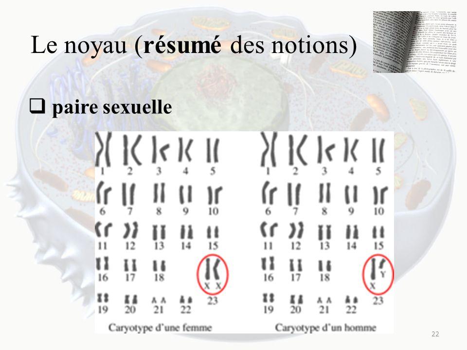 Le noyau (résumé des notions) paire sexuelle 22