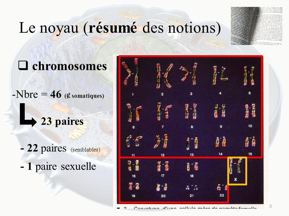 Le noyau (résumé des notions) chromosomes 23 -Nbre = 46 ( somatiques) 23 paires - 22 paires (semblables) - 1 paire sexuelle