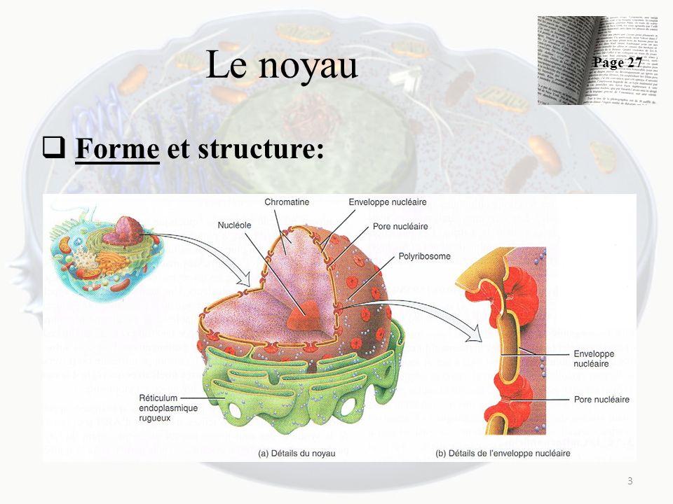 Le noyau Forme et structure: 3 Page 27