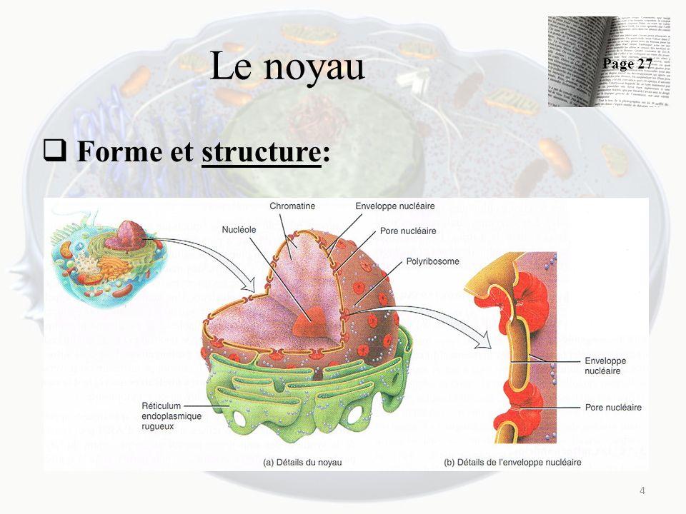 Le noyau Forme et structure: 4 Page 27