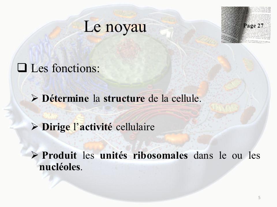 Le noyau Les fonctions: Détermine la structure de la cellule. Dirige lactivité cellulaire Produit les unités ribosomales dans le ou les nucléoles. 5 P