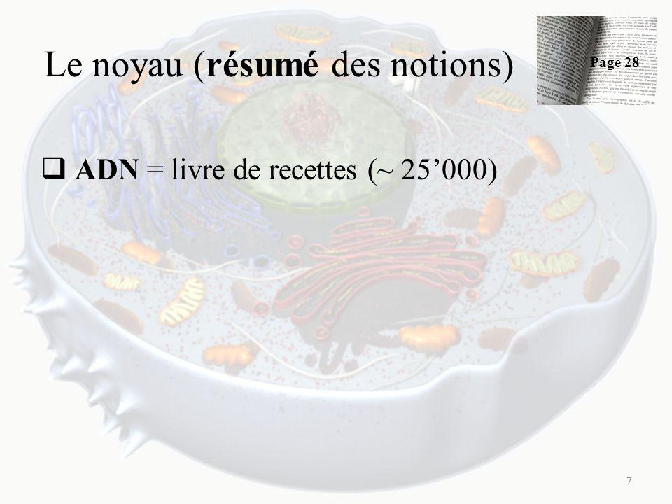 Le noyau (résumé des notions) ADN = livre de recettes (~ 25000) 7 Page 28