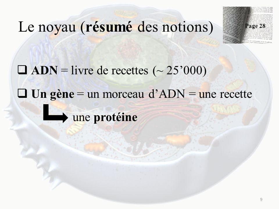 Le noyau (résumé des notions) ADN = livre de recettes (~ 25000) Un gène = un morceau dADN = une recette une protéine 9 Page 28