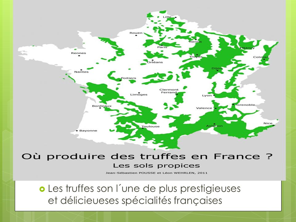 Les truffes son l´une de plus prestigieuses et délicieueses spécialités françaises