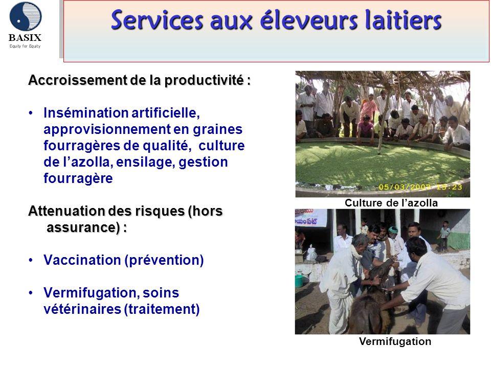Accroissement de la productivité : Insémination artificielle, approvisionnement en graines fourragères de qualité, culture de lazolla, ensilage, gesti