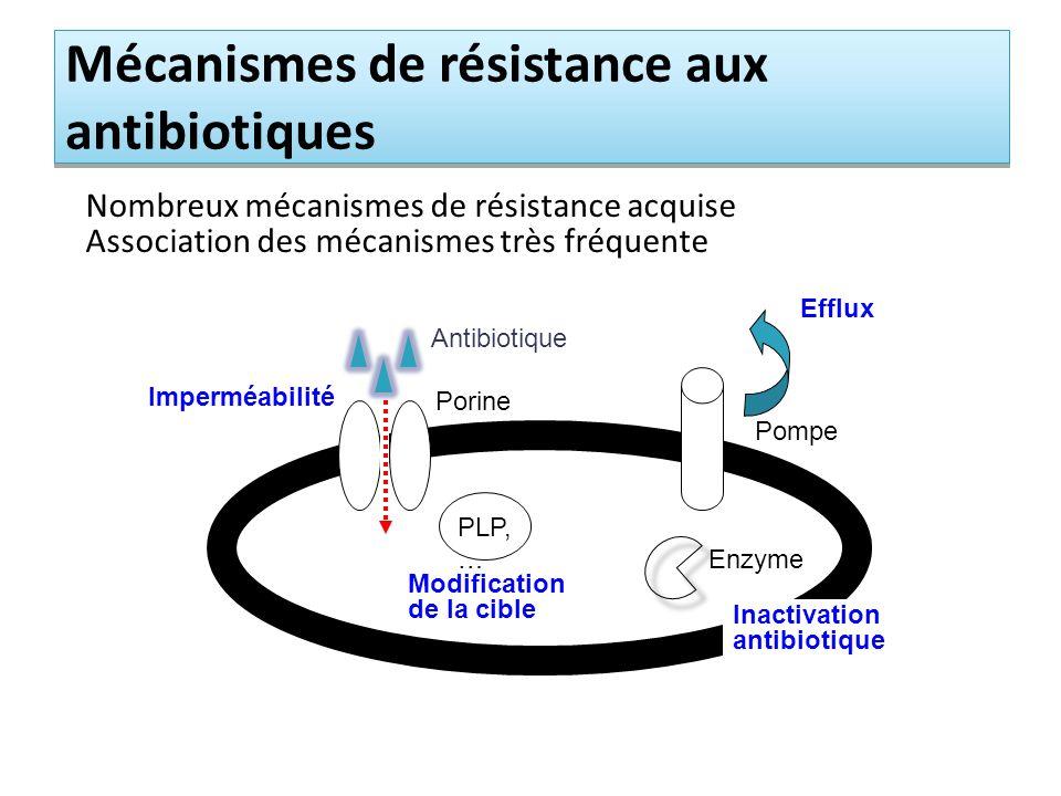 Mécanismes de résistance aux antibiotiques Nombreux mécanismes de résistance acquise Association des mécanismes très fréquente Imperméabilité Porine Antibiotique PLP, … Modification de la cible Inactivation antibiotique Enzyme Pompe Efflux