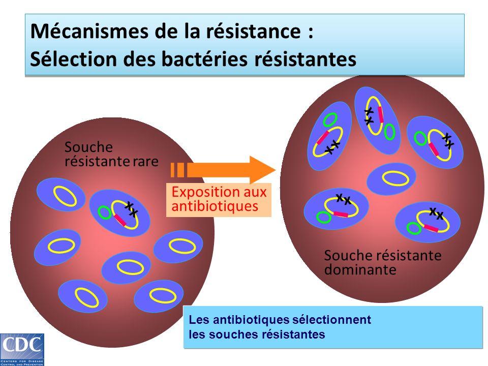 Souche résistante rare x x Souche résistante dominante Exposition aux antibiotiques x x x x x x x x x x Mécanismes de la résistance : Sélection des bactéries résistantes Les antibiotiques sélectionnent les souches résistantes
