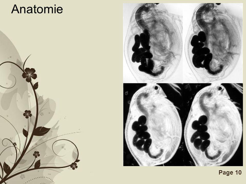 Free Powerpoint TemplatesPage 10 Anatomie