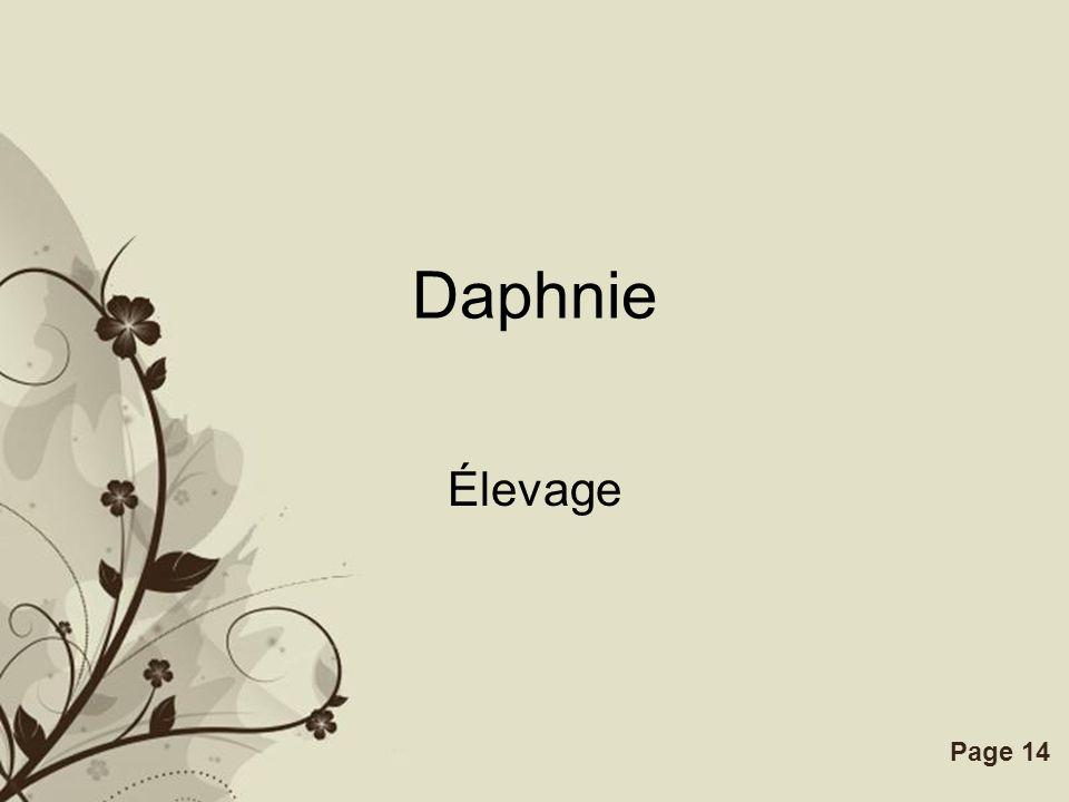 Free Powerpoint TemplatesPage 14 Daphnie Élevage